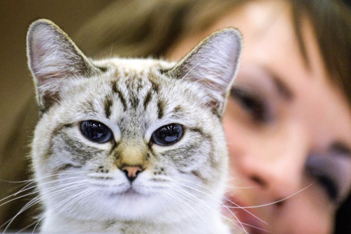 貓明白物理學和因果關係
