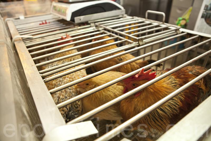 內地新增五宗人類感染甲型禽流感個案