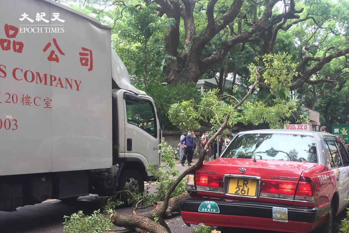 【突發】尖沙咀海防道塌樹 壓毁的士車尾