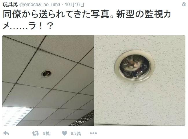 不可能的任務? 貓咪躲天花板「監視」員工