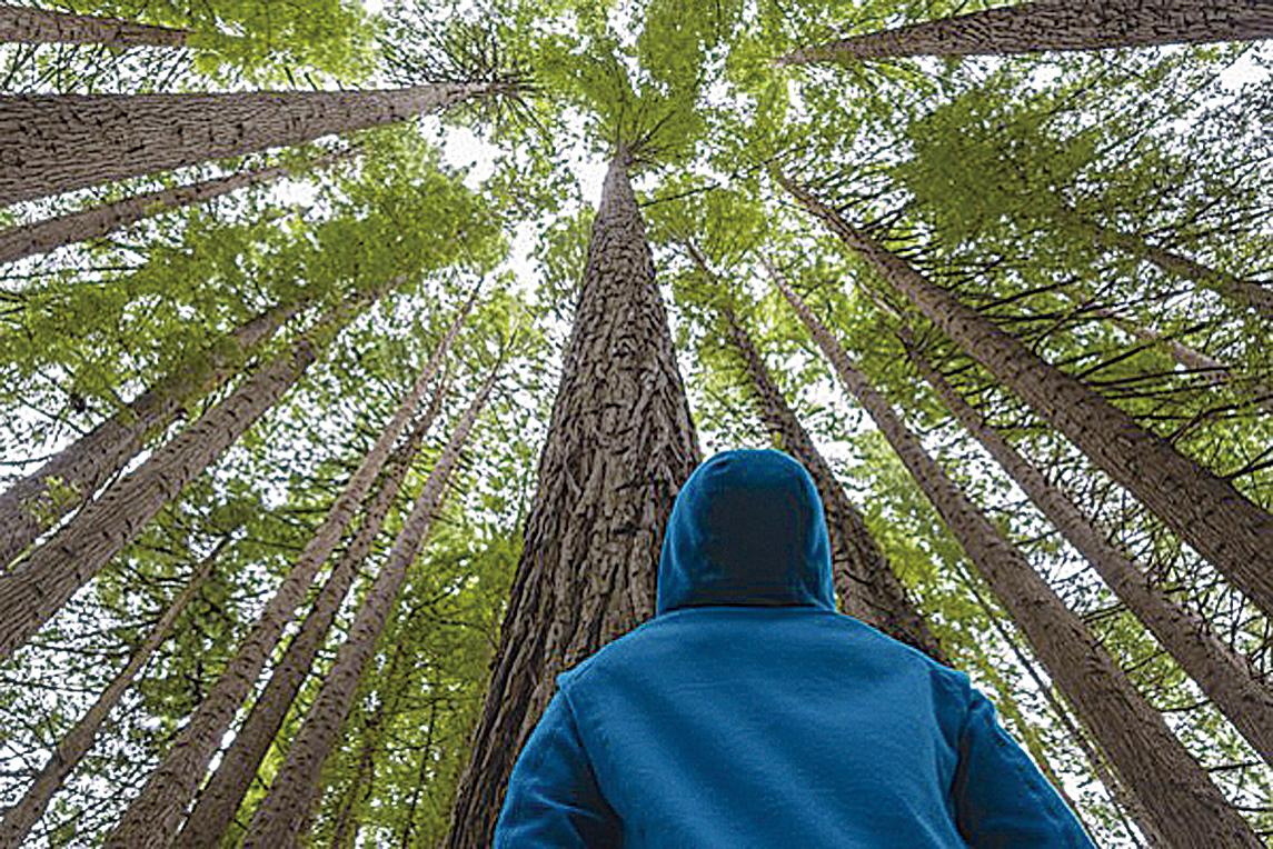 研究:樹有鮮為人知的祕密