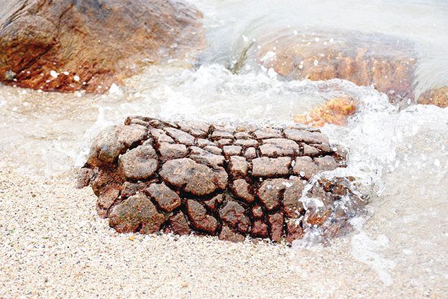 石英二長岩狀似菠蘿包被稱為野外菠蘿包。常年累月在海浪沖擊下,逐漸成形。