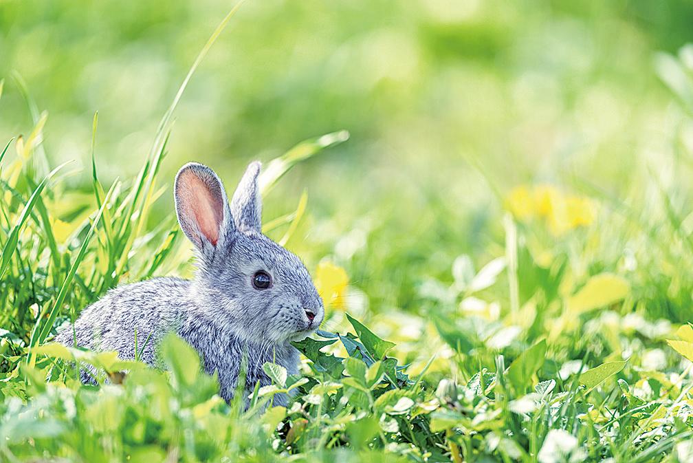 【成語故事】狡兔三窟