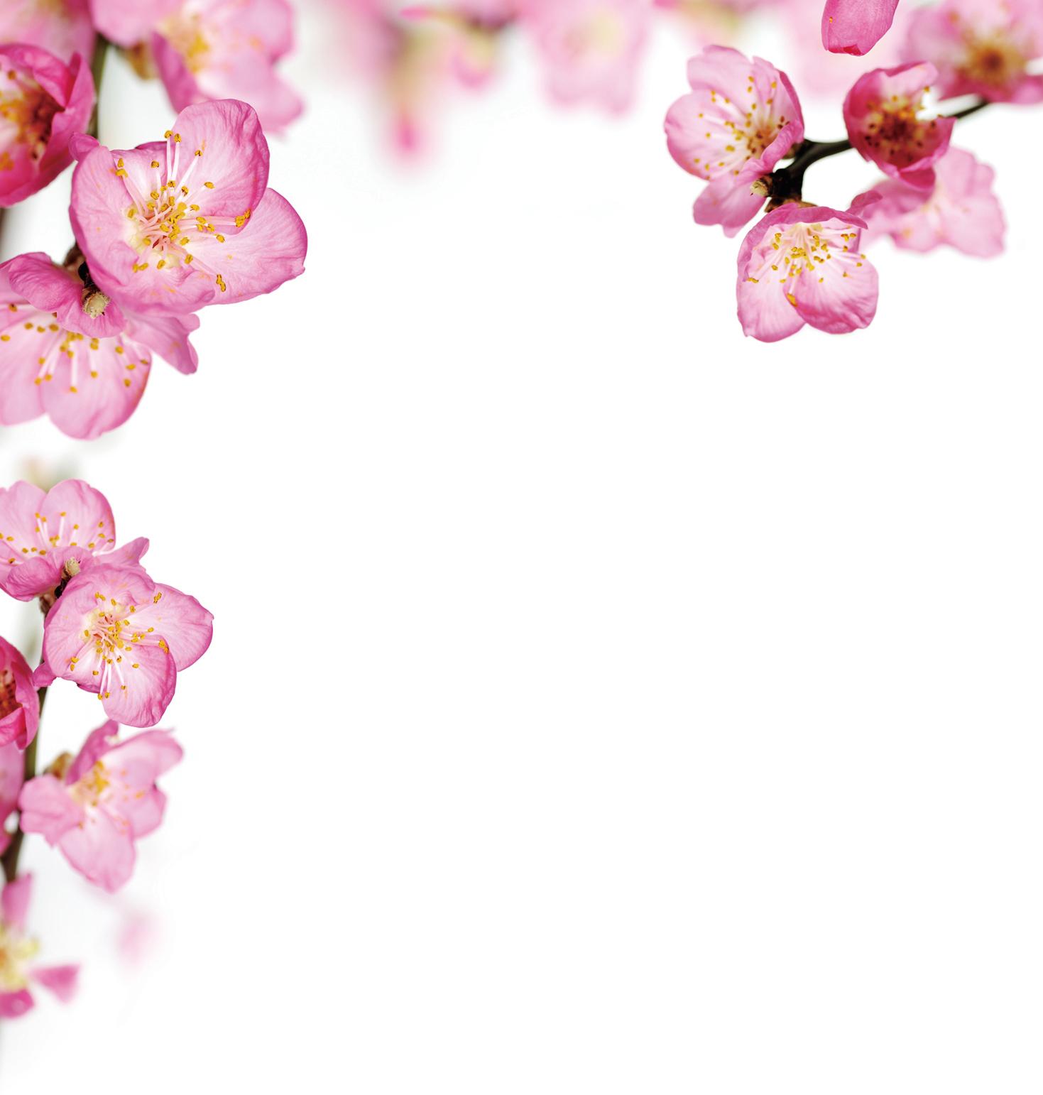 「驚蟄」春不老  花朝對月夕