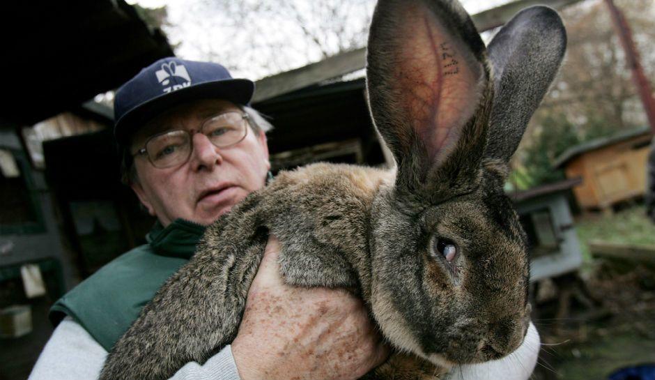 聯合航空:大兔子在著陸的時候還活著
