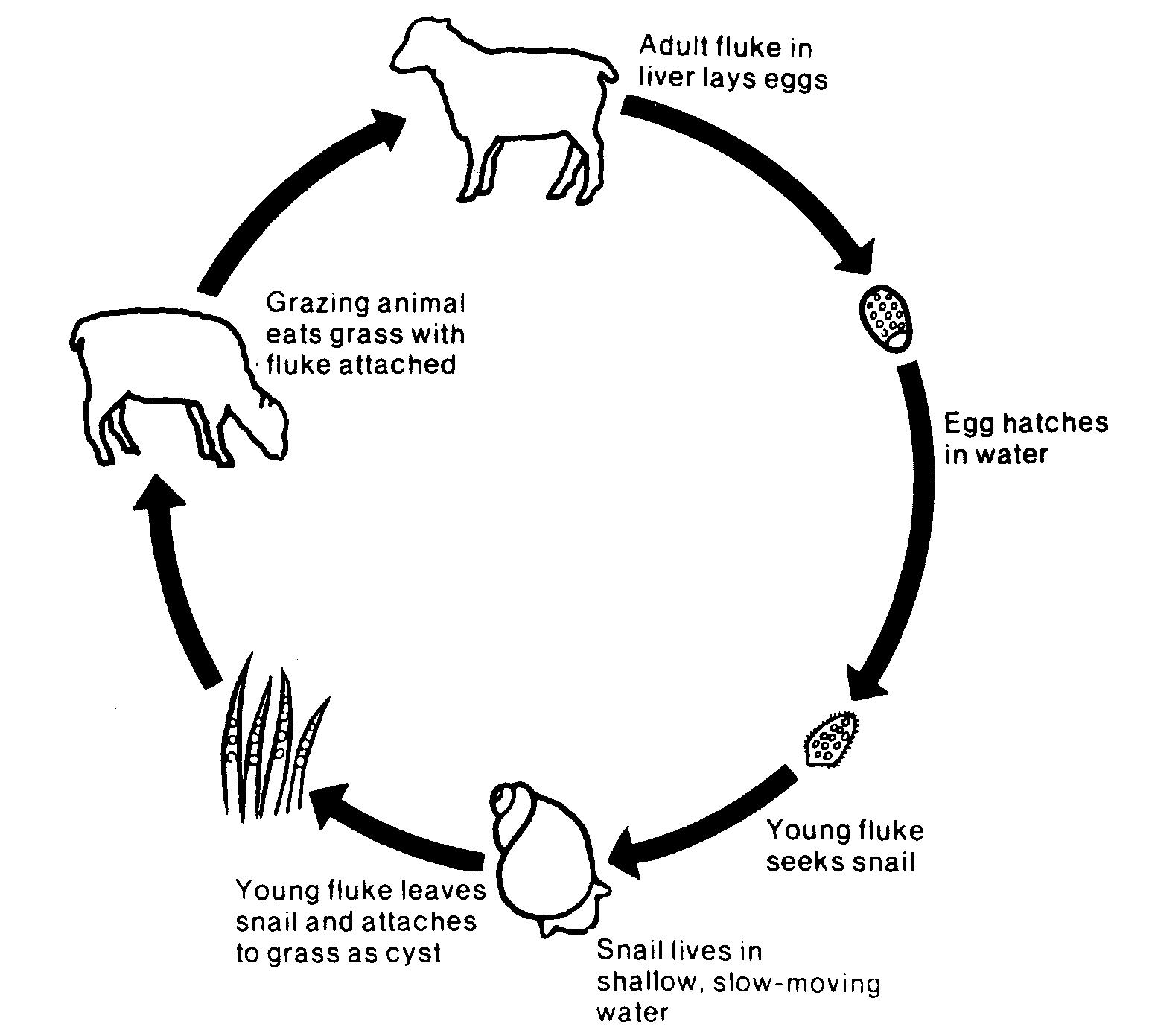 揭開史前文明的面紗(7)
