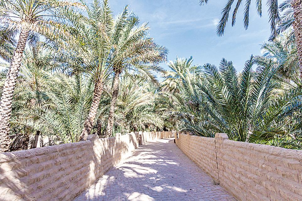 沙漠中的綠洲——艾因綠洲
