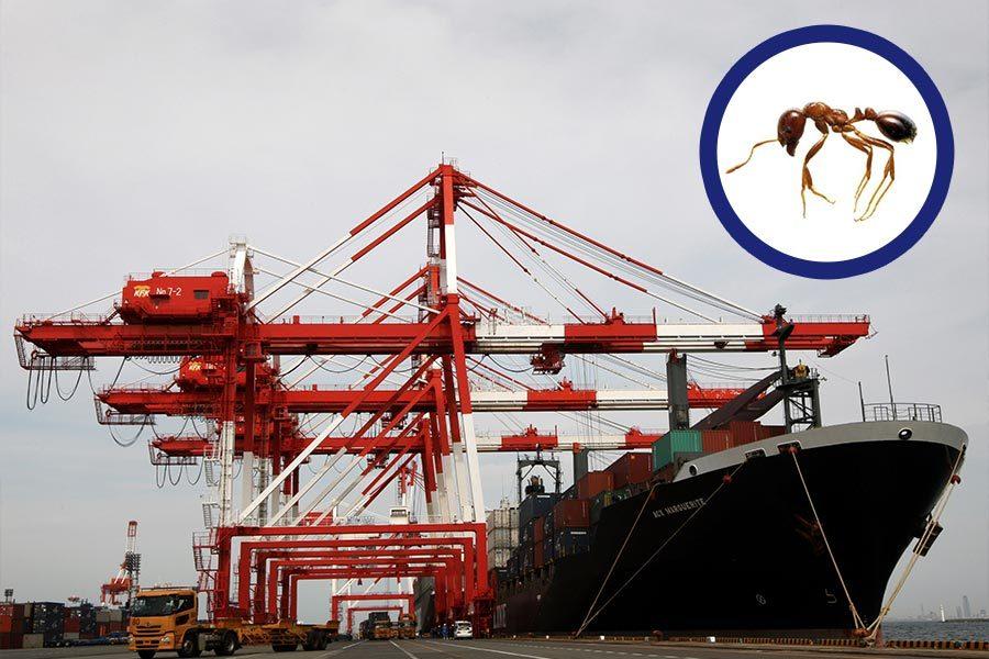日本現劇毒外來物種 來自中國貨船貨櫃