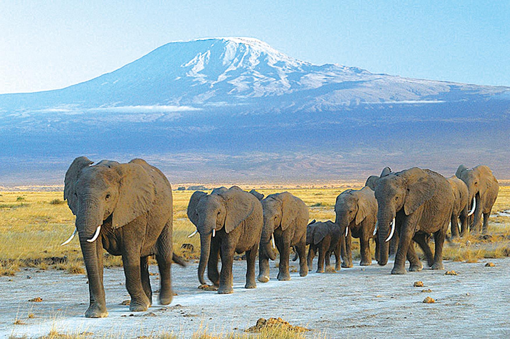 研究:第六次物種大滅絕正在上演