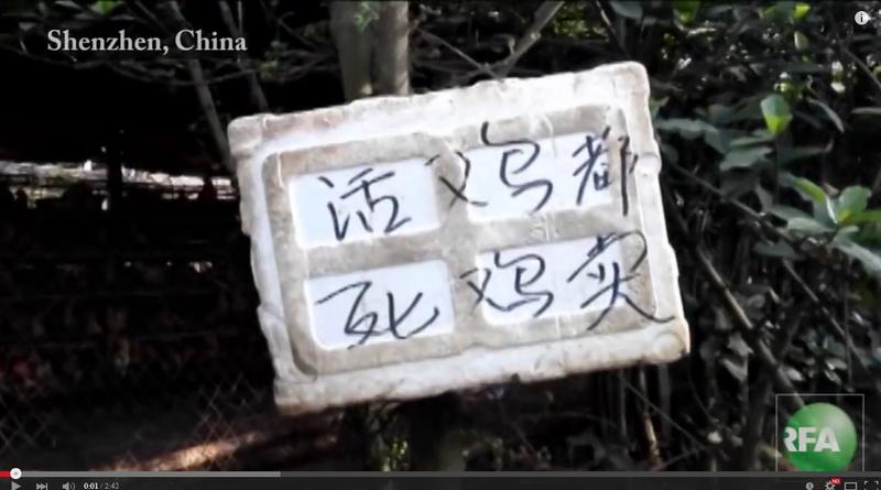 該養雞場的告示牌寫著「活雞、死雞都賣」。(視頻擷圖)
