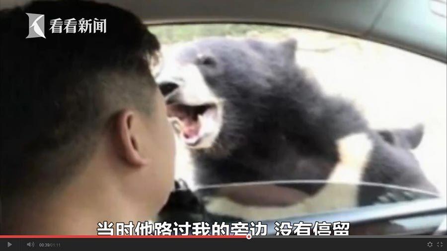 八達嶺熊咬人片段曝光 雙方說法有出入