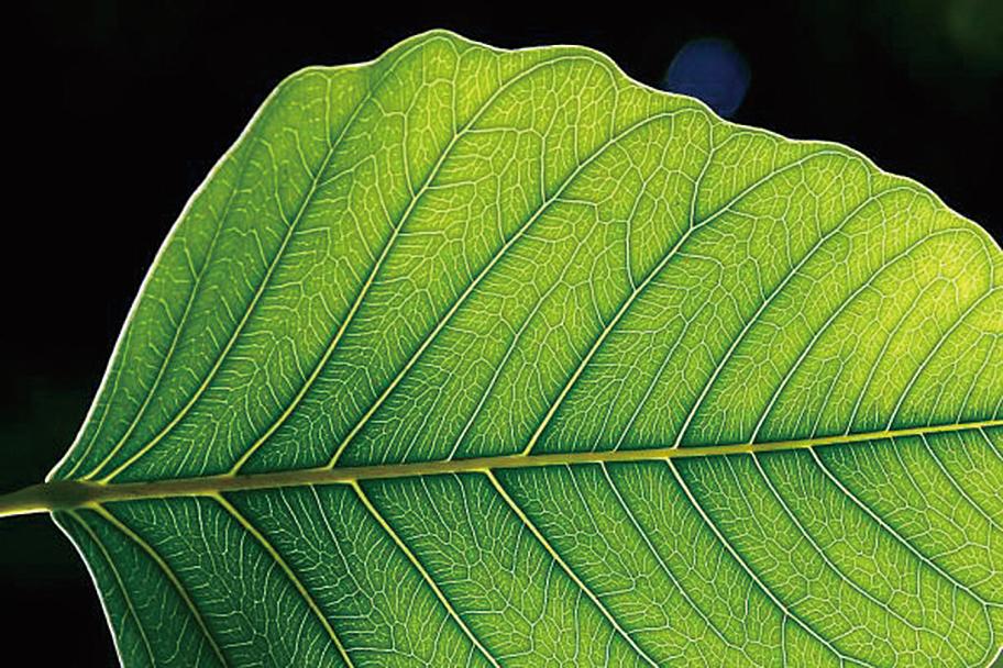 利用細菌提高光合作用 取代石油