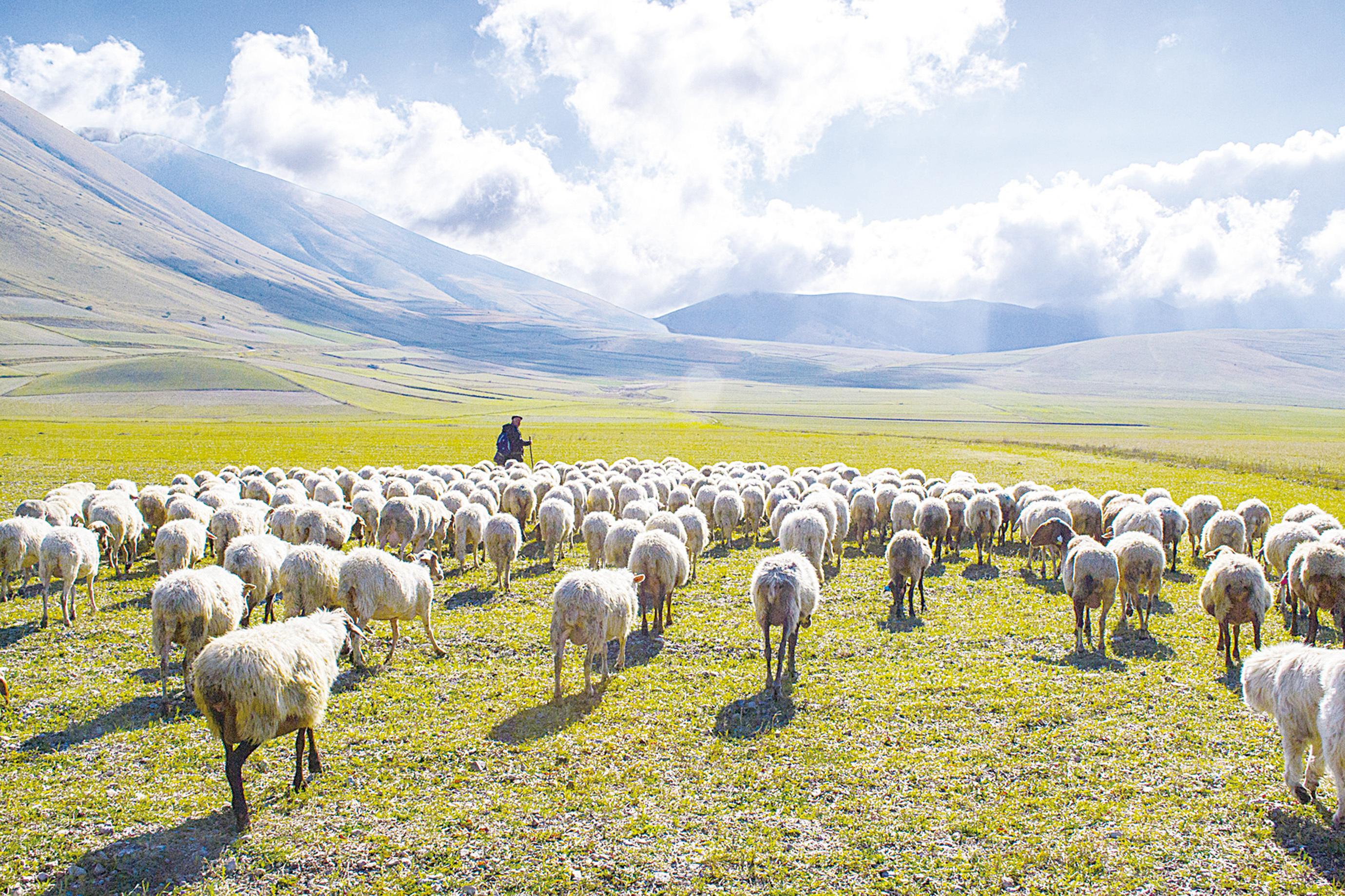 書摘:《山牧之愛》現代牧人的四季日常還有他的羊(1)