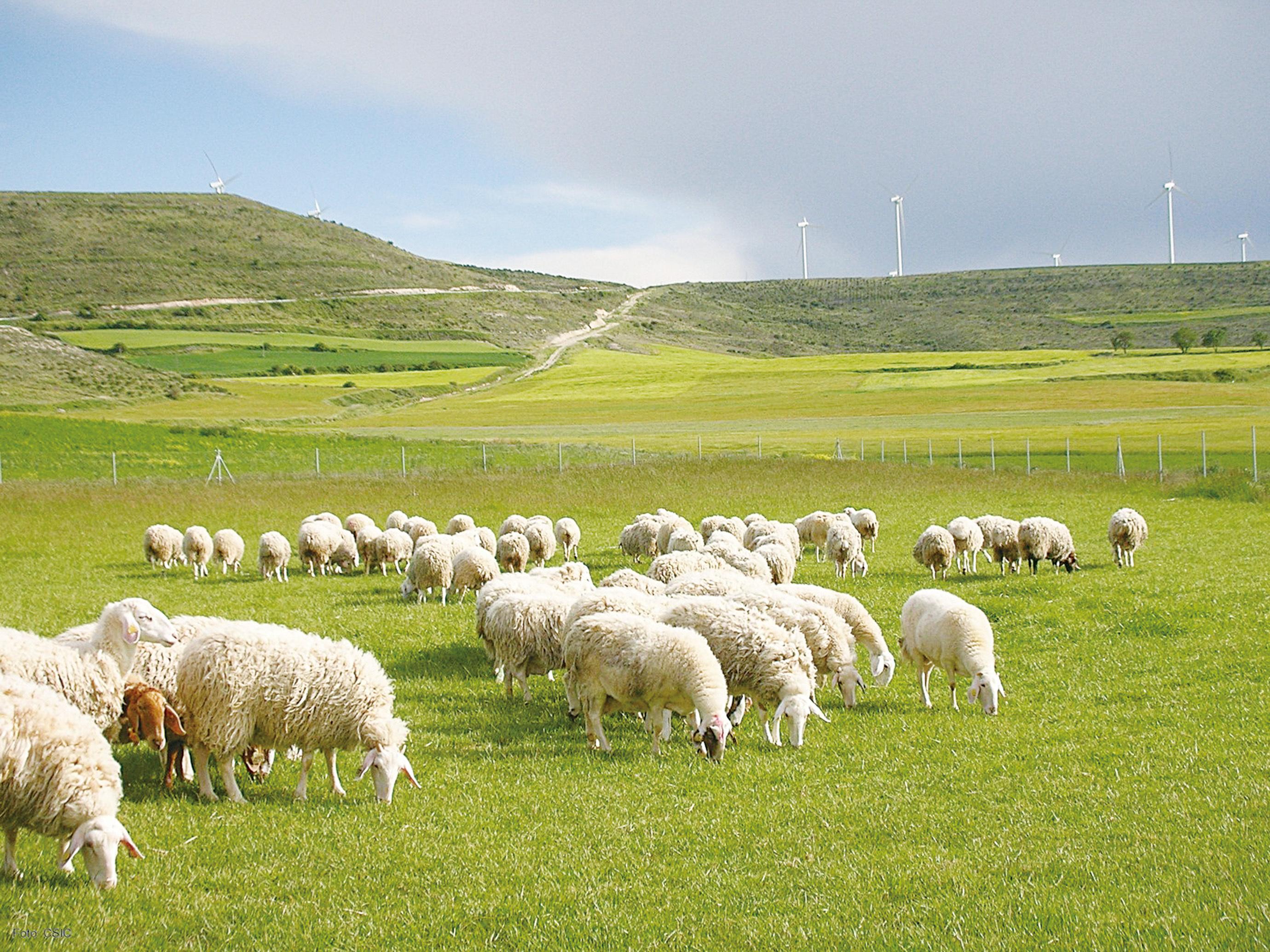 書摘:《山牧之愛》現代牧人的四季日常 還有他的羊(6)