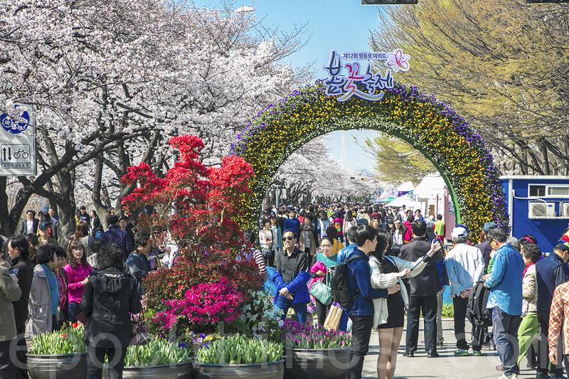 首爾春花慶典開幕 賞花客人山人海