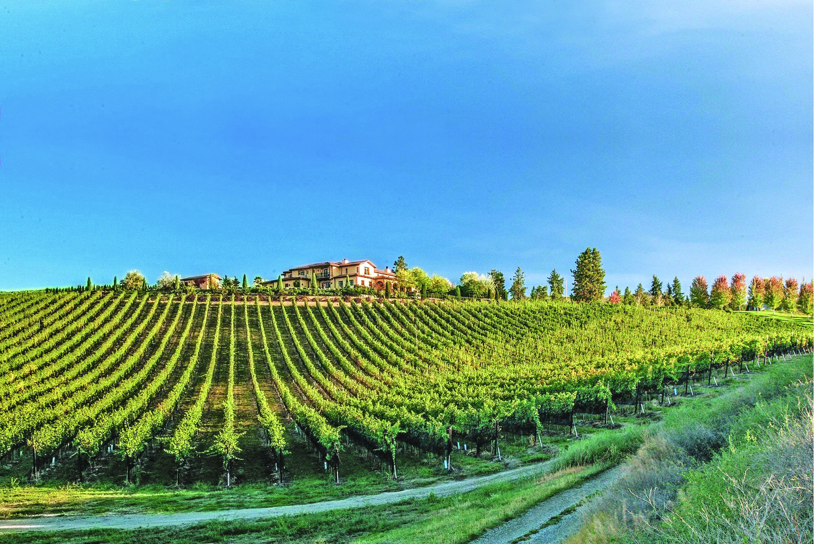 新秀酒園Mirabel Vineyards