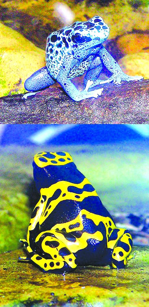 毒蛙為什麼毒不到自己?