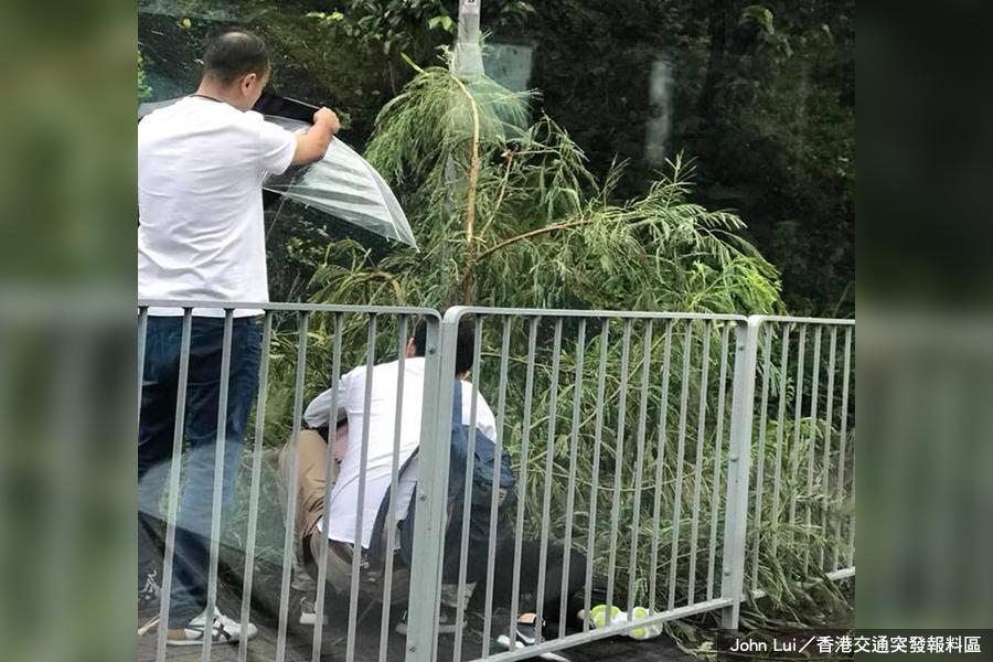 【卡努襲港】荃灣荃景圍五米大樹倒塌傷人