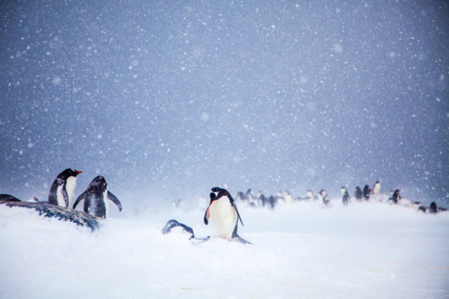 樹木化石再次證實 南極曾是鬱鬱蔥蔥大陸