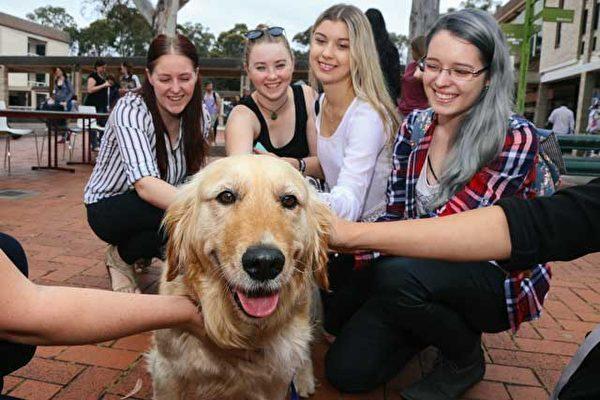 澳堪培拉大學為學生考試減壓 設寵物動物園