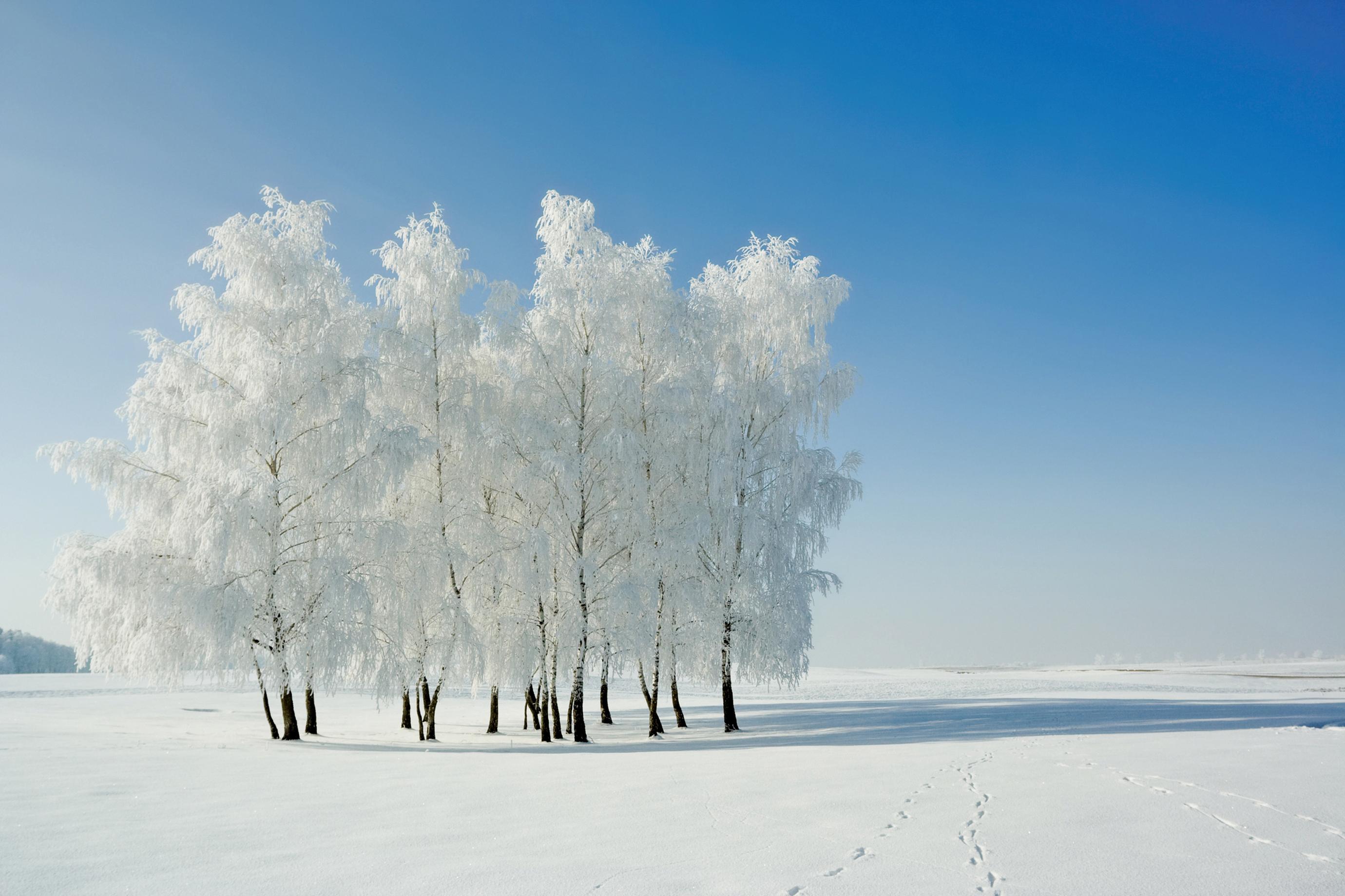 冬大過年有深意 港人做冬傳統不衰