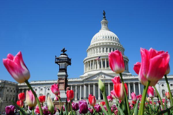 美參議院通過史上最大稅改法案