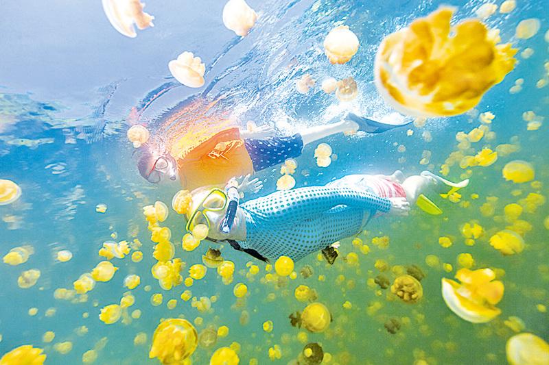 在帛琉水母湖與無邊無際的水母一起游泳。