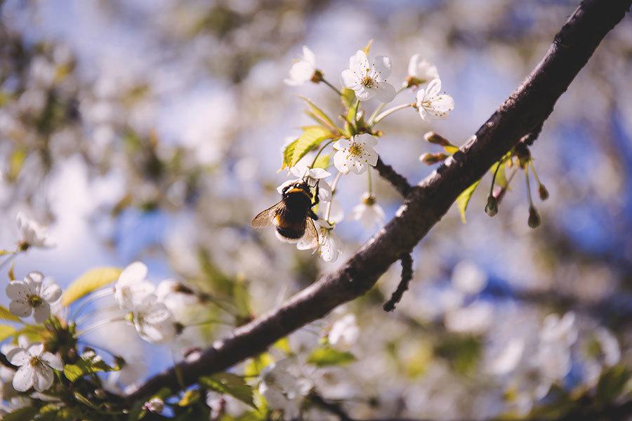 【節氣典故】驚蟄時節 春雷始鳴萬物復甦