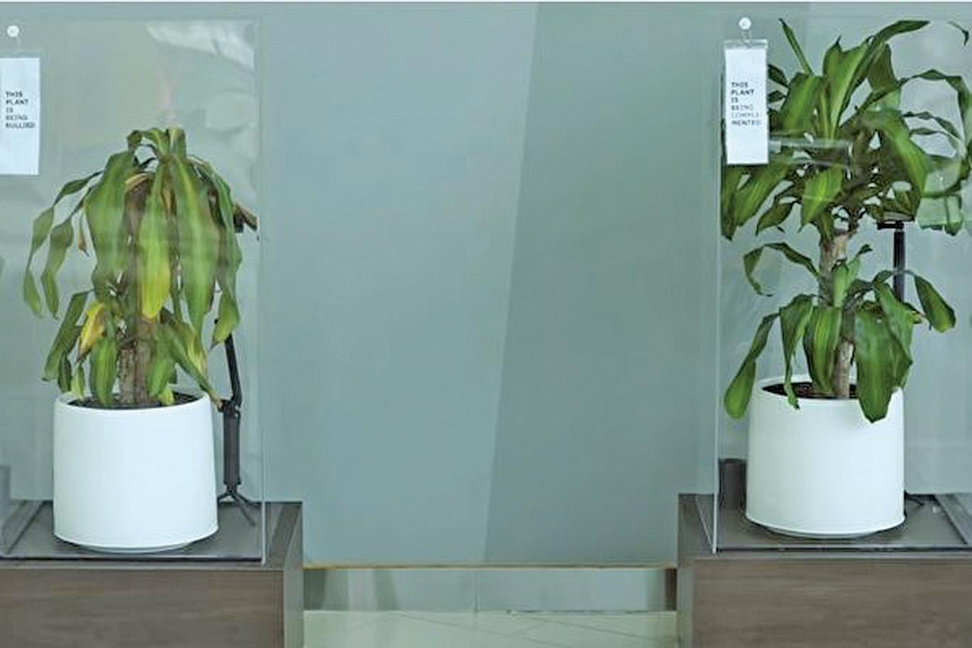 IKEA實驗植物被言語霸淩和讚美 結果驚人