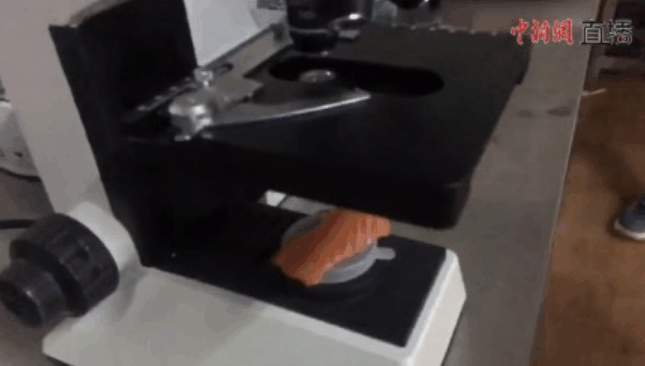 央視宣傳三文魚養殖節目 用虹鱒魚做檢測