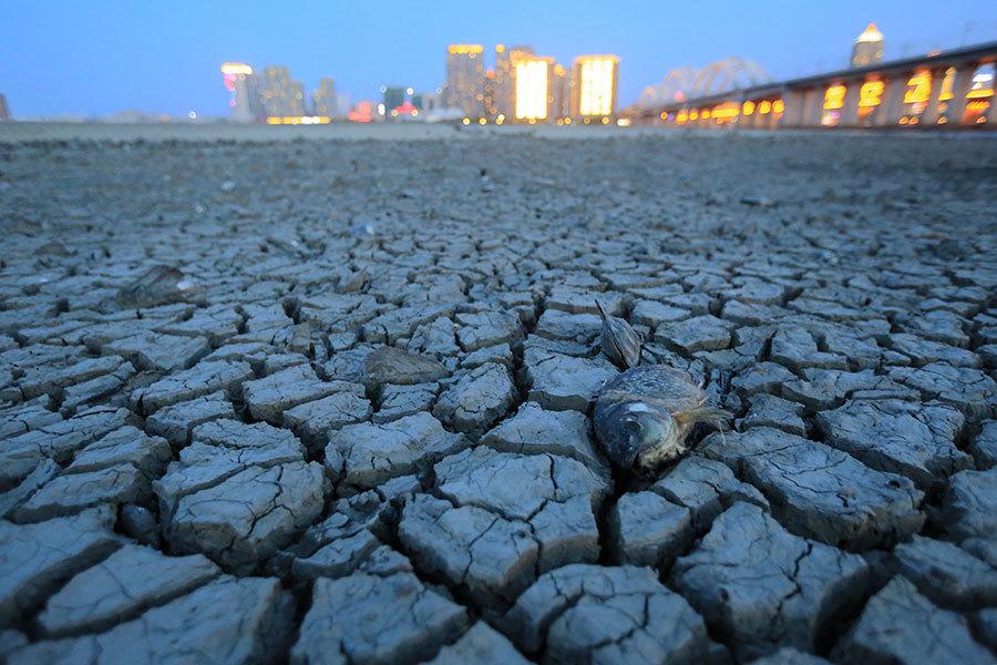 松花江水位現11年最低 哈爾濱市民河床挖蚌