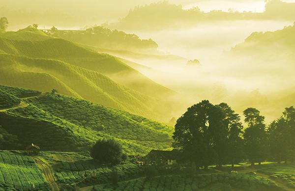 山在雲霧飄渺中