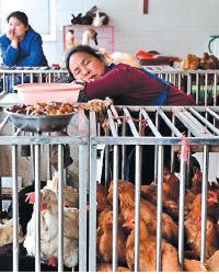 據香港衛生防護中心公佈,大陸上月通報的禽流感死亡個案有7宗。(Getty Images)