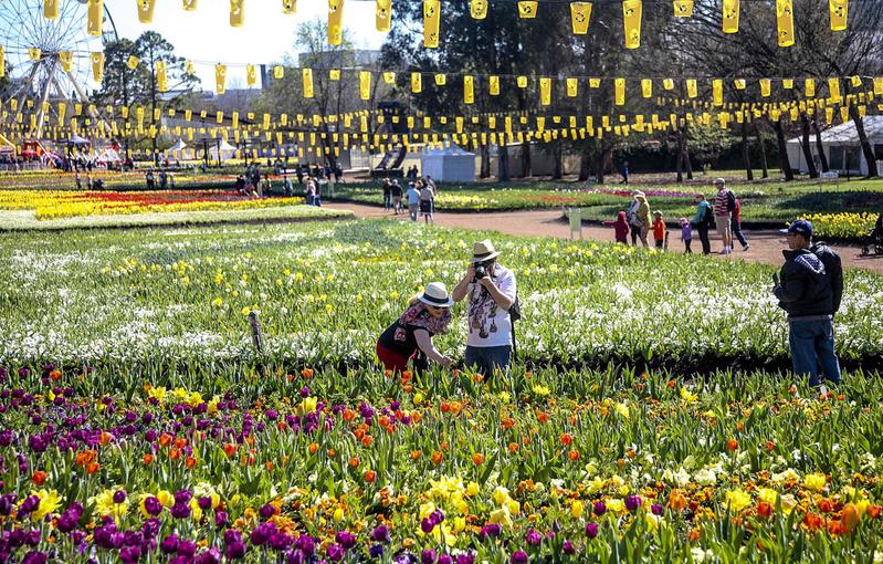 組圖:南半球最大的花展